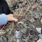 爬墙的藤本植物,爬山虎图片,爬墙虎植物批发